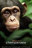 Šimpanzi